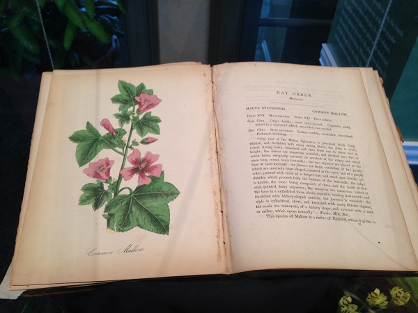 Antique Victorian Botanical