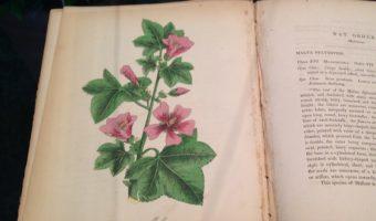 Victorian Botanicals Exhibit at Daniel Stowe Botanical Garden