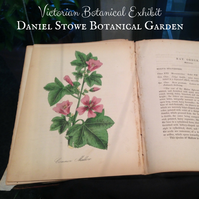 Victorian Botanicals Exhibit at Daniel Stowe Botanical Garden