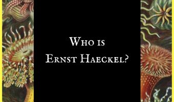 Who is Ernst Haeckel?